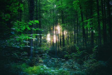 Licht schijnt door de bomen in het bos Stockfoto