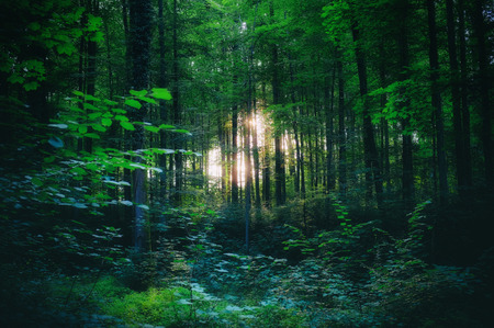Light shining through the trees in the woods