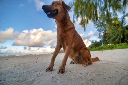 Happy dog on the beach, Anse Volbert, Seychelles