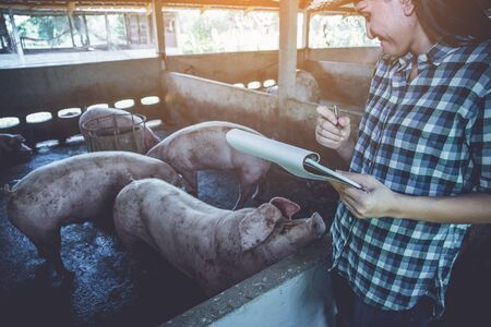 chek: woman farmer working on check and manage pig farm