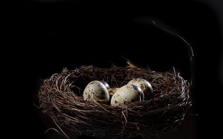 nido de pajaros: Huevo de codorniz en el nido Foto de archivo