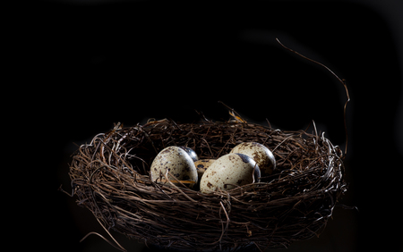 quail egg: Quail Egg in the nest Stock Photo