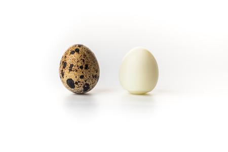 Wachtel-Egg