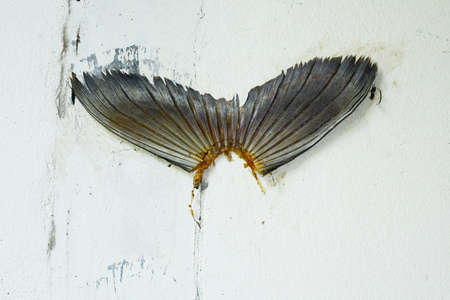 nailed: fish tail paste on the cement wall by fisherman