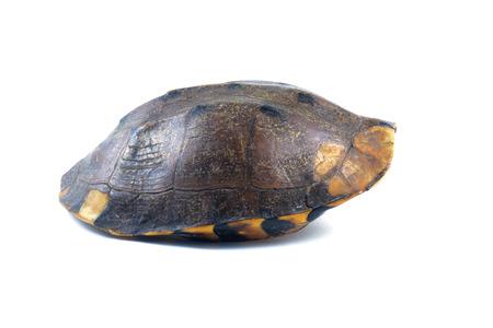 Armadura de tartaruga no fundo branco Foto de archivo - 82447934