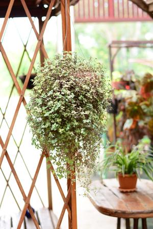 ornamental pots hang on metal bar in farm garden Stock Photo
