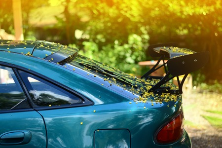 the body of car dirty from flowers and leaves Stock Photo