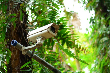 the CCTV near the tree in the park