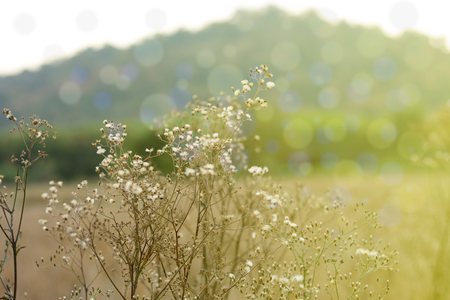 dry grass flowers with yellow day light  in morning