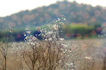 dry grass flowers with day light  in morning