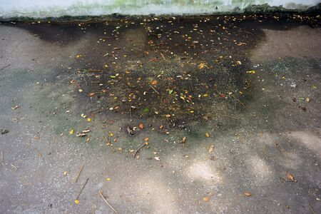 the dirty stain and small leaves of the tree at cement ground