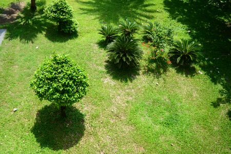 the high view of the garden with the trees and grass  in front of the building in the late morning