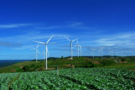 The white electric wind turbine with blue sky and cabbage garden  at Petchaboon, Thailand