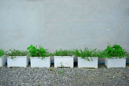 The row of white cement pots with green small plants on gravels ground near the wall
