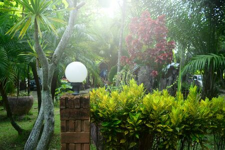 Morning atmosphere at home garden with sunlight  and ornamental trees