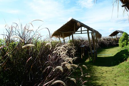 the small hut on hill with grass flowers and blue sky at tourist attraction of northen Thailand Фото со стока