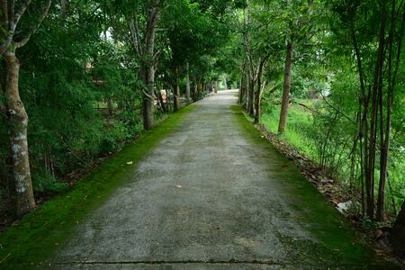 The cement street and green moss on beside with trees