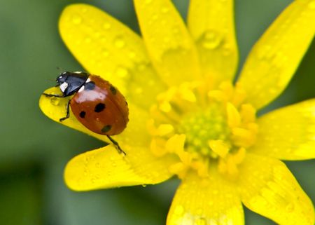 warmly: a ladybird meets an early spring and warmly