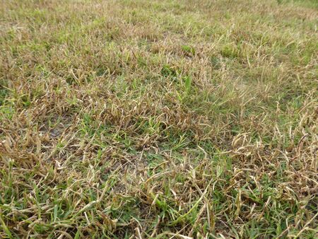 slovenly: Parched grass Stock Photo
