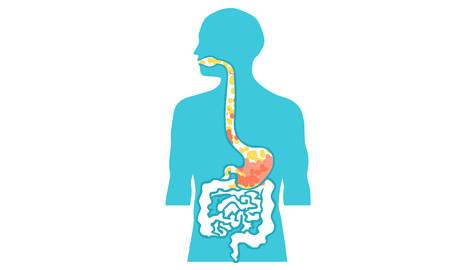 duodenal: inside body human vector illustration Illustration