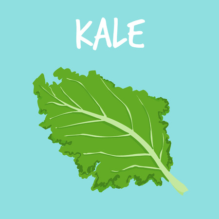 dietary fiber: fresh kale on blue balckground vector illustration