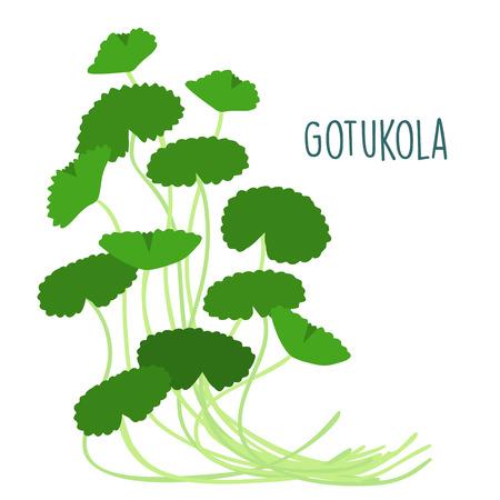 leprosy: fresh gotukola leaf in withe backgruond vector illustration