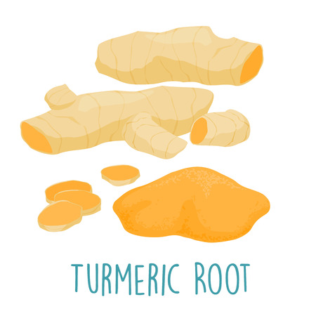 turmeric: fresh turmeric root on white background vector illustration