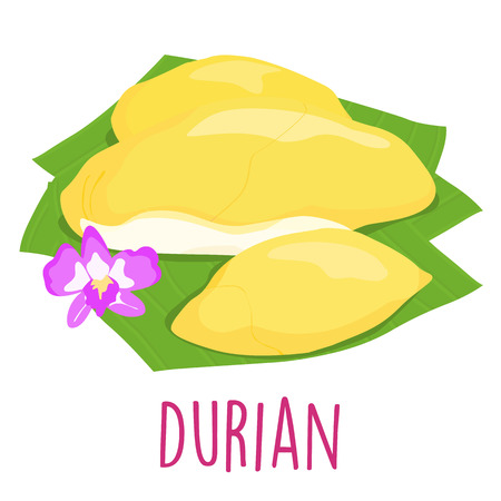 tropical food: durian Thai popular fruit white background illustration