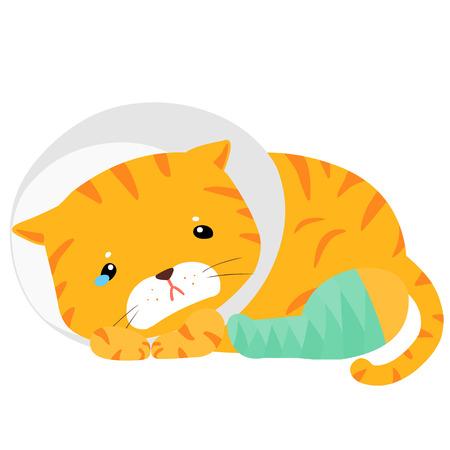 pity: cat splinting leg with elizabeth collar vector