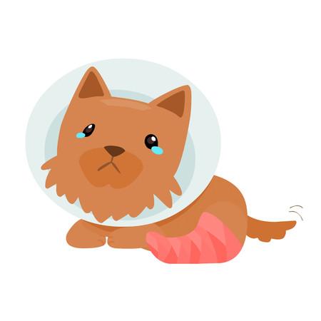 pity: yorkshire terrier splinting leg with elizabeth collar