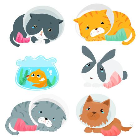 pity: pity pet splinting cartoon vector set Illustration