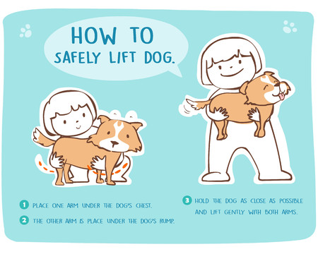 safely: Demonstrate how to safely lift dog cartoon style vector