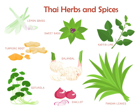 thai herb: Thai herbs and spices aromatic vector illustration
