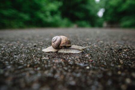 Snail crawling on asphalt close-up view Reklamní fotografie