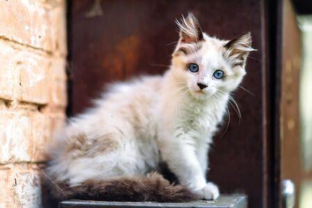 Homeless grimy little white kitten. Foto de archivo - 134877676