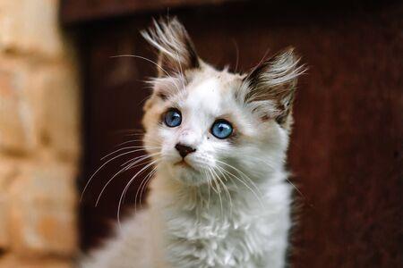 Homeless grimy little white kitten. Foto de archivo - 134877680