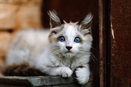 Homeless grimy little white kitten. A beautiful cat with blue eyes. Foto de archivo - 134877681