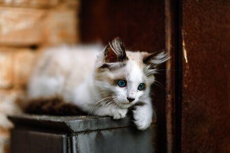 Homeless grimy little white kitten. A beautiful cat with blue eyes. Foto de archivo - 134877679