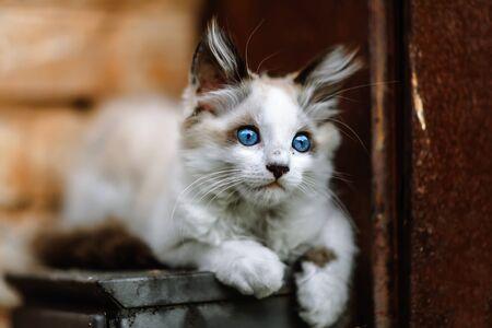 Homeless grimy little white kitten. A beautiful cat with blue eyes. Foto de archivo - 134877678