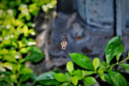 upside down spider sleeping on his web Stock Photo
