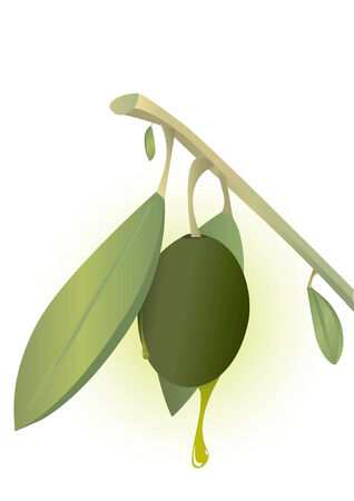 healty food: Natural Olive and Olive Oil