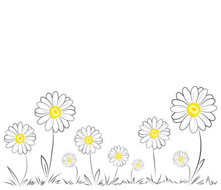 Daisies on white background Illustration