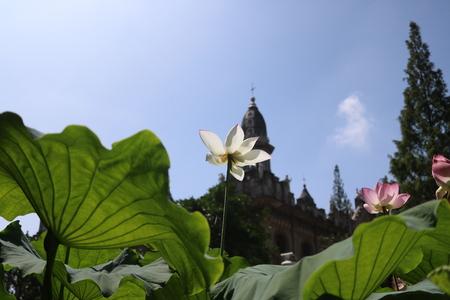 lotus temple: Lotus temple