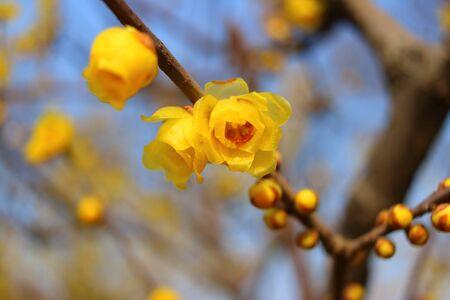 in bloom: Bloom Stock Photo