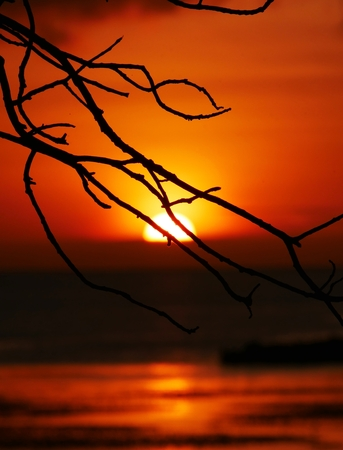 Twigs and sunset Twigs of a tree are silhouetted against the setting sun. Stock Photo