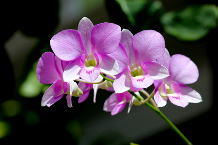 Purple orchids A branch of purple orchids Stock Photo
