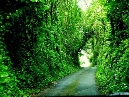 エンチャンテッド プレイス、ロタ、CNMI 地元の人々 はしばしばエンチャンテッド プレイスとしてソンソン村のこの絵のような道を参照します。ロタ