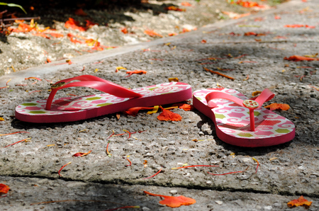 fallen tree: pair of slippers A pair of red slippers on a rough pavement is surrounded by fallen flame tree flowers