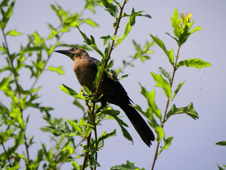 Bird perched on the branch of a tree