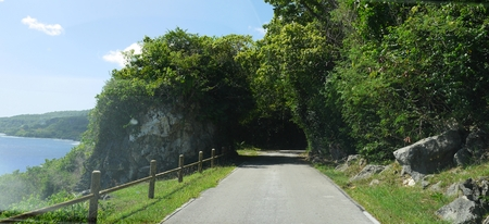 Coastal road leading to a tunnel of trees and thick foliage in a tropical island